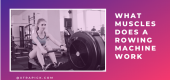 What Muscles Does a Rowing Machine Work? Detailed Explanation Guide